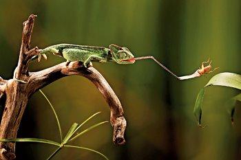 Resultado de imagen de reptiles dieta