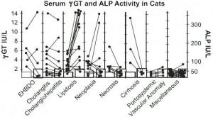 Actividad de fosfatasa alcalina y GGT en gatos